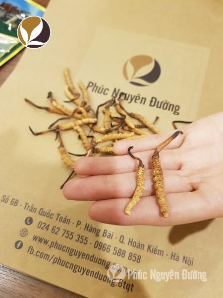 Dùng trùng thảo hầm chung với các loại thực phẩm bổ dưỡng