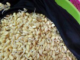 Bột mầm đậu nành – Vị cứu tinh cho cuộc sống khỏe mạnh và tuyệt vời